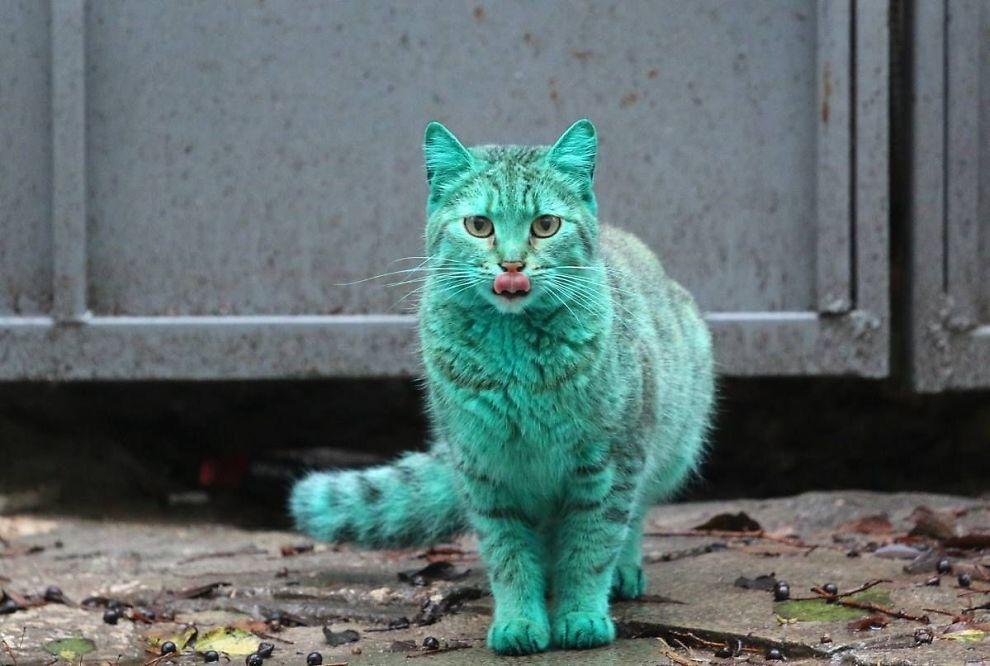 BGR__Bulgaria_Green_Cat